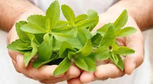 foglie d stevia